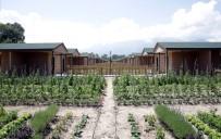 HOBİ BAHÇESİ - Hobi Bahçelerinde Sona Doğru