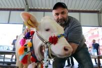 MURAT ÖZDEMIR - Kelkit Organik Tarım Ve Hayvancılık Festivali Yapıldı
