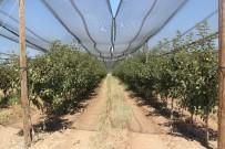 2 Bin 500 Dönümlük Meyve Bahçesinin Üzerini Fileyle Kapattı