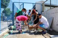 HAYVANLARI KORUMA DERNEĞİ - Barınaktaki Hayvanları Serinleten Etkinlik