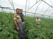 Akçaabat'ta Şehirleşme İle Birlikte Tarım Arazileri Küçülüyor