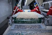 ARJANTIN - Üretimde Yüzde 20 Artış Bekleniyor