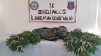 UYUŞTURUCU OPERASYONU - Jandarmadan Uyuşturucu Operasyonu