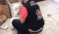 Sarp Sınır Kapısı'nda Süs Köpeği Operasyonu