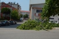 ŞİDDETLİ RÜZGAR - Sinop'ta Şiddetli Rüzgar Hasara Neden Oldu