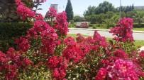HERCAI - Yaz Çiçekleri Alaşehir'i Renklendiriyor