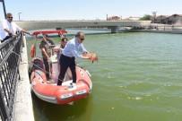 TELEFERIK - Avlu Balıkesir'de Balık Tutma Keyfi Başlıyor