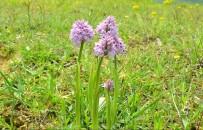 SINIR ÖTESİ - Orkideler Koruma Altına Alınıyor
