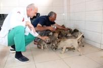 KAPALI ALAN - Sokak Hayvanlarının Hem Hastanesi Hemde Evi Oldu