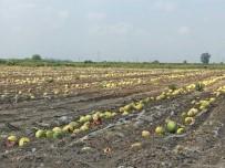 ZIRAAT BANKASı - Ürünleri Sıcaktan Yanan Çiftçi Destek Bekliyor