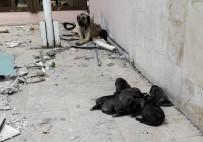 YIKIM ÇALIŞMALARI - Yanan Binada Bulunan Yavru Köpekleri İtfaiye Ekipleri Kurtardı