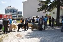 DOĞUM ORANI - Yerli Irk Honamlı Keçisi, Üreticiyi İhya Edecek