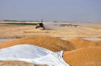 MEZOPOTAMYA - Çiftçiler, Tefecilerin Eline Düşmek İstemiyor