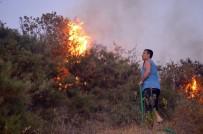 ZEYTINLIK - Didim'deki Yangın Yazlıkçıları Korkuttu