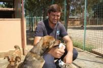 FETHIYE BELEDIYESI - Sıcaktan Bunalan Köpekler Dondurma Ve Duşla Serinletiliyor