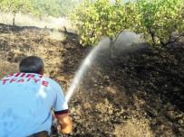 İTFAİYE MÜDÜRÜ - Siirt'te Yangın Fıstık Ağaçlarına Sıçramadan Söndürüldü
