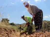 EROZYON - Kadınlar Fidanla Ev Ekonomilerine Destek Oluyor