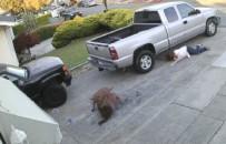 PİTBULL - Sahiplerini Sürükleyerek Kediye Saldırdılar