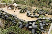 Selin Vurduğu Çiçek Üreticileri Devletten Destek Bekliyor