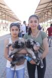 KANGAL KÖPEĞİ - 14. Kangal Festivali