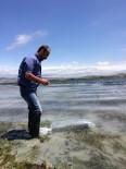 Amasya'da 4 Gölete 35 Bin Sazan Yavrusu Bırakıldı