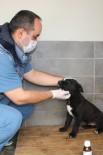 ÇANKAYA BELEDIYESI - Çankaya Belediyesi 817 Sokak Hayvanını Sahiplendirdi