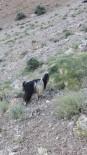 BEYDAĞı - Kayalıklarda Mahsur Kalan Keçi Kurtarıldı