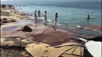 MOLDOVA - Kıyıya Vuran Suntaların Temizliğine Büyükşehir El Attı