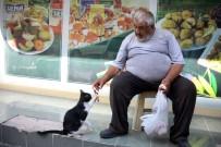 YUSUF YıLMAZ - Kazancının Yarısını Kedilere Harcıyor