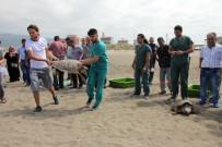 CAHIT ÇELIK - Tedavi Edilen Kaplumbağalar Denize Bırakıldı