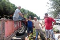 ZEYTİN AĞACI - Başkan Gençer Altınova Sahil Yolundaki Kavşağın Işıklandırılmasının Talimatını Verdi