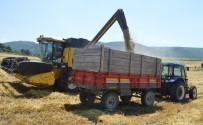 KROMOZOM - Buğdayın Atası 'Siyez'in Hasadı Devam Ediyor