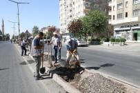 NAZIM HİKMET - Büyükşehir Belediyesi Yeşil Bir Kent İçin Çalışıyor