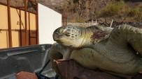 DENİZ KAPLUMBAĞALARI - Marmaris'te Karaya Ölü Caretta Caretta Vurdu