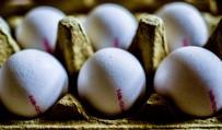GIDA GÜVENLİĞİ - AB Yumurta Skandalına El Attı Açıklaması ''Birbirinizi Suçlamayı Bırakın''