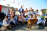 HAYVAN BAKIM EVİ - Beylikdüzü'nde Ücretsiz Kuduz Aşısı Kampanyası Başlıyor