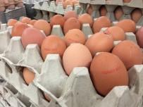 AVUSTURYA - Böcek İlaçlı Yumurtalara Hong Kong Ve İsviçre'de De Rastlandı