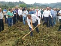 HALUK PEKŞEN - CHP'li Torun Açıklaması 'Lütfen Fındık Üreticisine Sahip Çıkın'