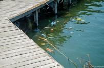 DALYAN - Dalyan Kanalındaki Kirlilik Tepki Çekti