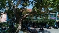 ÇINAR AĞACI - Eski Belediye Binası Kütüphane Oluyor