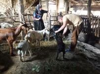 MECIDIYE - İzmit Belediyesi, Köyleri Ziyaret Ediyor