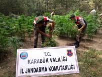 Jandarma Uyuşturucu Üretime Göz Açtırmıyor
