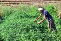 ORGANIK TARıM - Köylü Kadınlar Gibi Şalvar Giyen Alman, Kazdağları'nda Organik Tohum Üretiyor