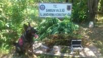 KİMLİK TESPİTİ - Samsun'da Uyuşturucu Operasyonları