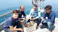 İNCİ KEFALİ - Balıkçılar, Kaçak Avcıların Mağduru Oldu