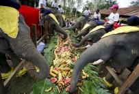 ÇEVRE VE ORMAN BAKANı - Dünya Fil Günü Kutlandı