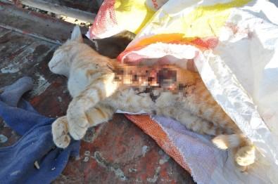 Kedileri silahla öldürüp çöpe attılar!