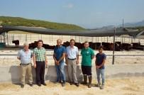 TAŞKıRAN - Tokat'a Bölgenin En Büyük Besi Çiftliği Kuruldu