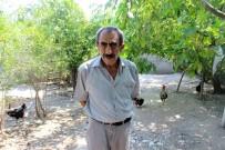 MEMUR EMEKLİSİ - 150 Tavuğu Çalan Hırsız Güvenlik Kamerasının Kayıt Cihazını Da Almış