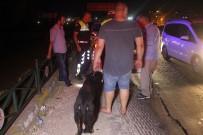 ALKOLLÜ SÜRÜCÜ - 175 Promilli Sürücü Köpeğini Bırakmadı
